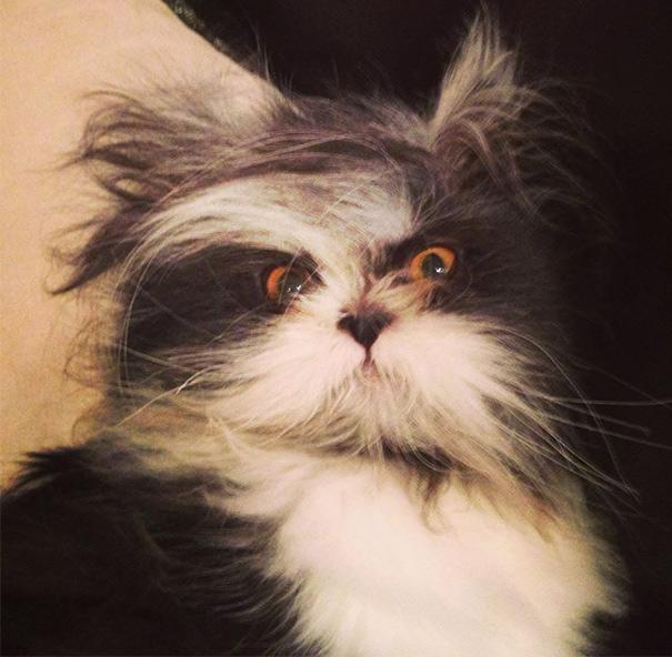 Atchoum O gato cujo o olhar irá devorar sua alma (20)