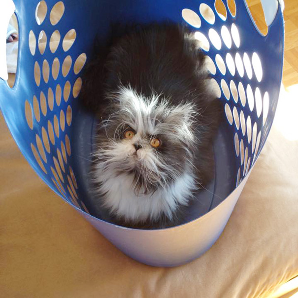 Atchoum O gato cujo o olhar irá devorar sua alma (3)