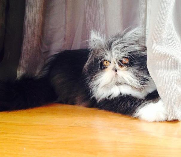 Atchoum O gato cujo o olhar irá devorar sua alma (4)