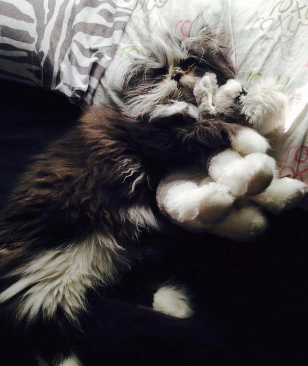 Atchoum O gato cujo o olhar irá devorar sua alma (5)