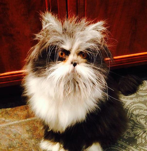 Atchoum O gato cujo o olhar irá devorar sua alma (6)