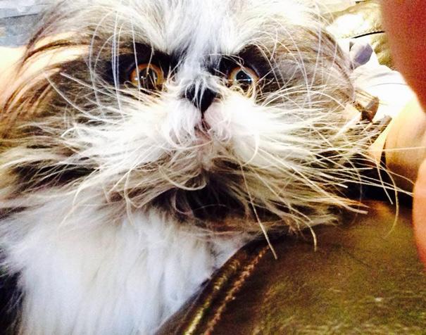 Atchoum O gato cujo o olhar irá devorar sua alma (8)