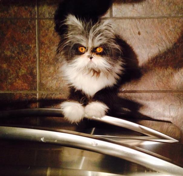 Atchoum: O gato cujo o olhar irá devorar sua alma