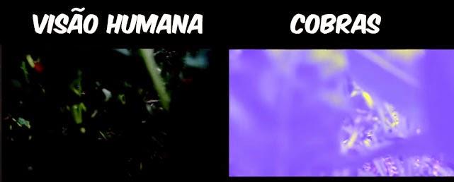 Como-é-a-visão-dos-animais-COBRAS