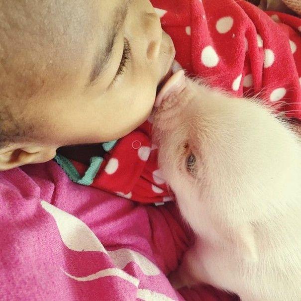 Este porquinho é o melhor amigo dessa garotinha (1)