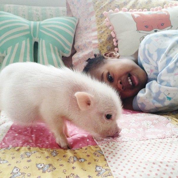 Este porquinho é o melhor amigo dessa garotinha (13)