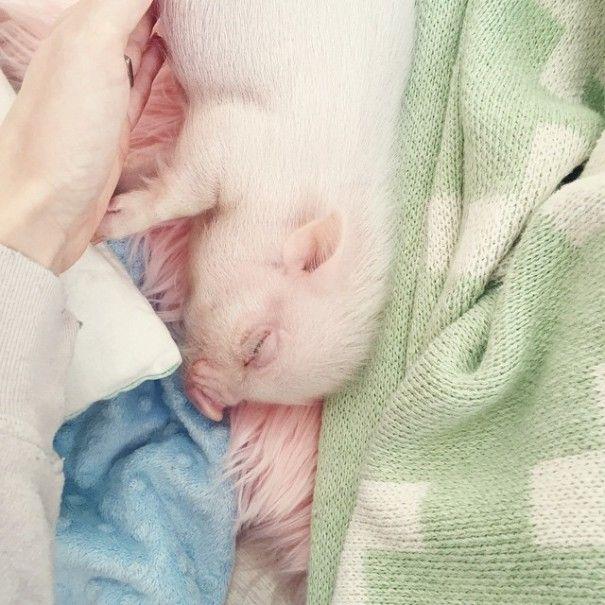 Este porquinho é o melhor amigo dessa garotinha (6)