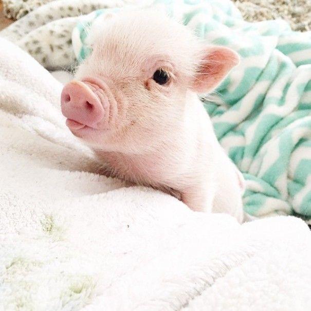 Este porquinho é o melhor amigo dessa garotinha (7)