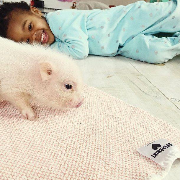 Este porquinho é o melhor amigo dessa garotinha (9)