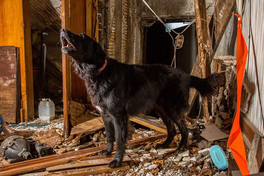 Fotógrafo tira fotos de cães trabalhando duro (10)