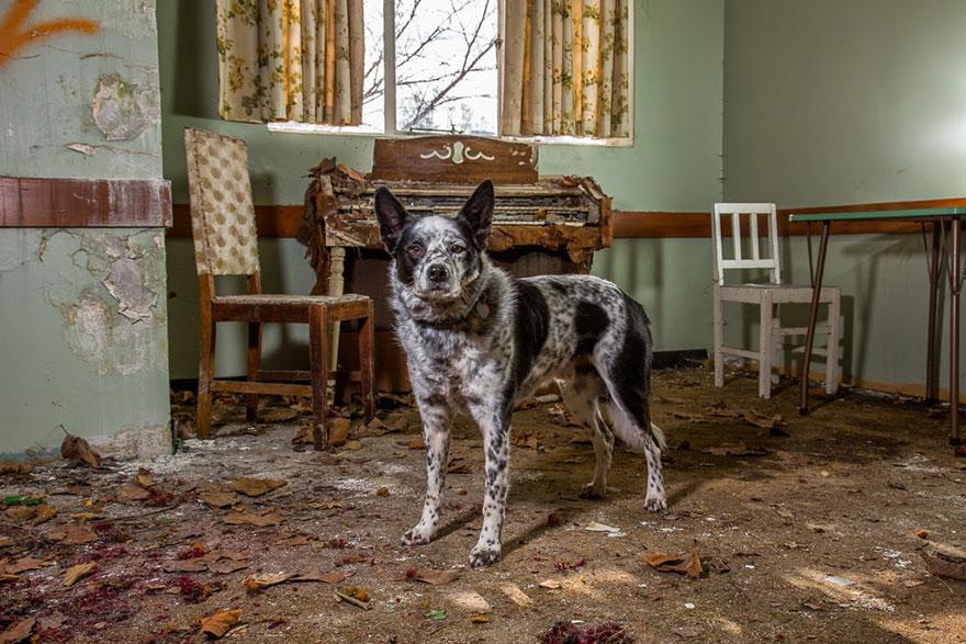 Fotógrafo tira fotos de cães trabalhando duro (11)