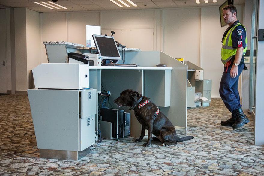 Fotógrafo tira fotos de cães trabalhando duro (12)