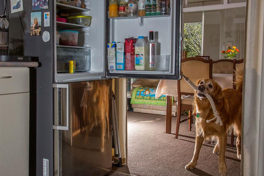 Fotógrafo tira fotos de cães trabalhando duro (19)