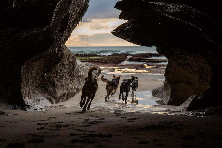 Fotógrafo tira fotos de cães trabalhando duro (2)