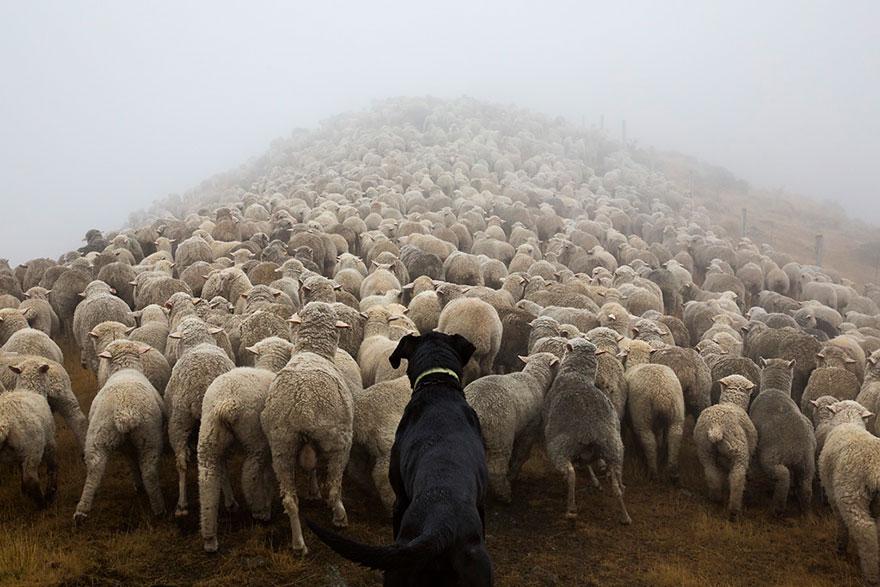 Fotógrafo tira fotos de cães trabalhando duro (5)