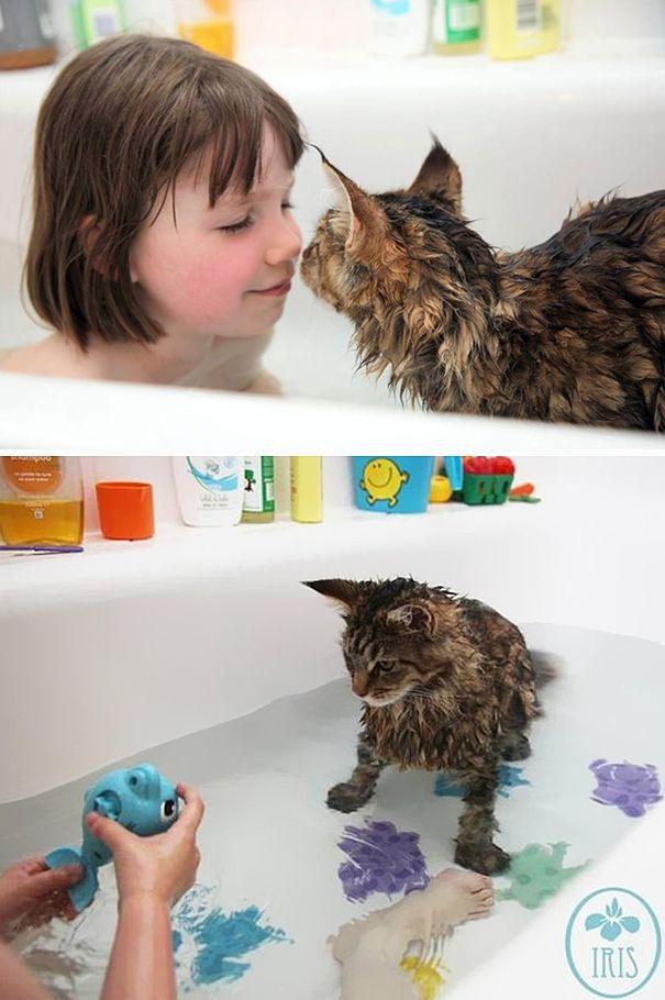 Gatos-que-adoram-água (10)