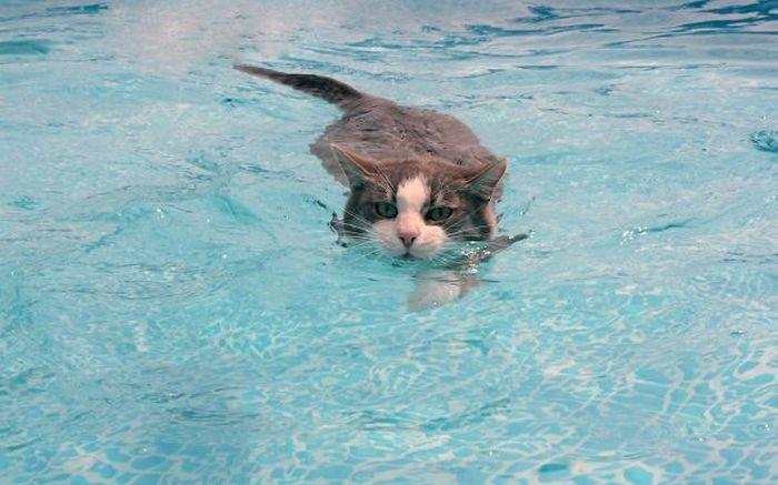Gatos-que-adoram-água (11)