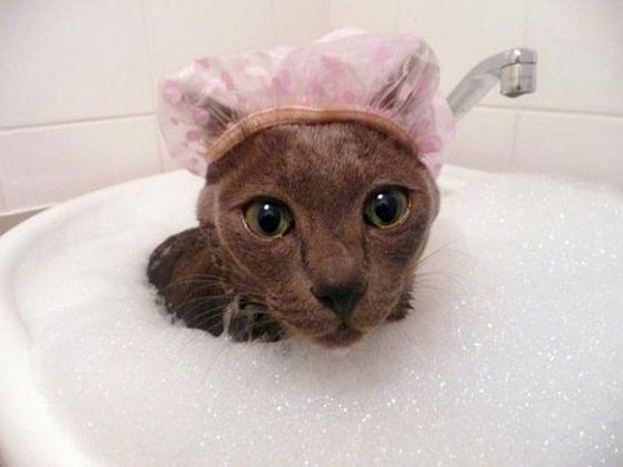 Gatos-que-adoram-água (14)