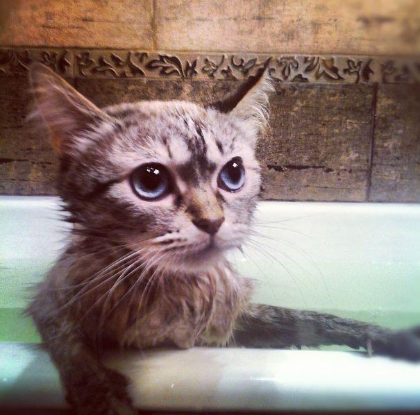 Gatos-que-adoram-água (4)