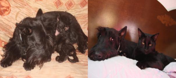 Gatos-que-usam-Cães-como-almofadas (1)