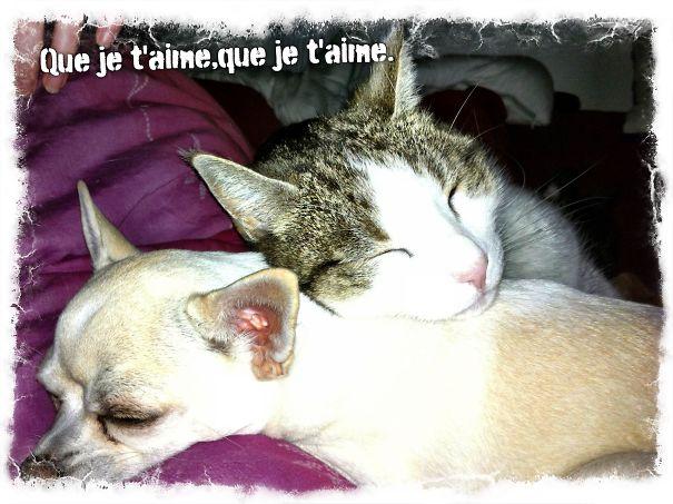 Gatos-que-usam-Cães-como-almofadas (58)