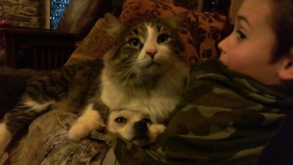 Gatos-que-usam-Cães-como-almofadas (74)