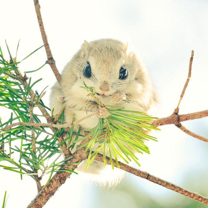 A ilha de Hokkaido no Japão é o lar de animais super fofos (1)