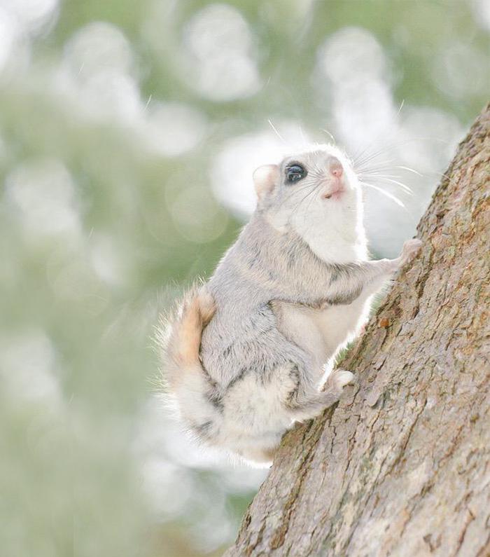 A ilha de Hokkaido no Japão é o lar de animais super fofos (11)