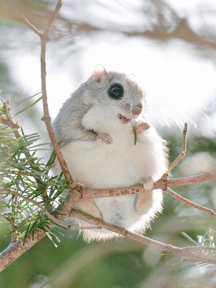 A ilha de Hokkaido no Japão é o lar de animais super fofos (12)