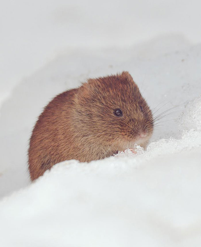 A ilha de Hokkaido no Japão é o lar de animais super fofos (17)