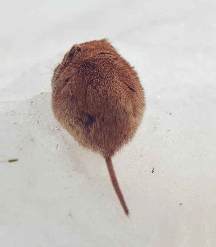 A ilha de Hokkaido no Japão é o lar de animais super fofos (18)