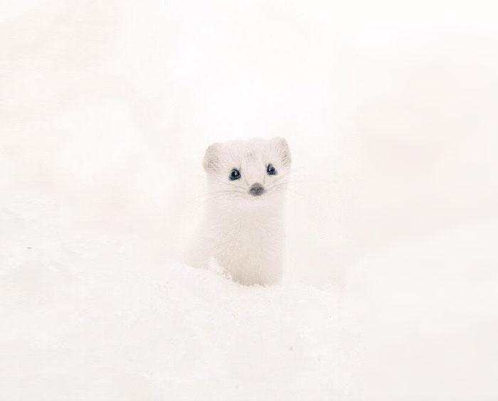A ilha de Hokkaido no Japão é o lar de animais super fofos (19)
