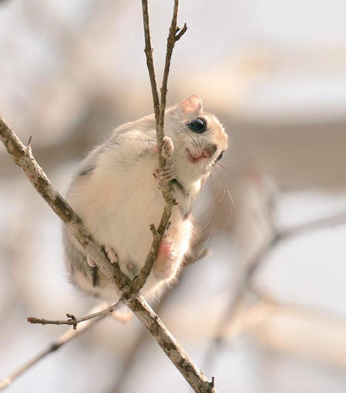 A ilha de Hokkaido no Japão é o lar de animais super fofos (2)