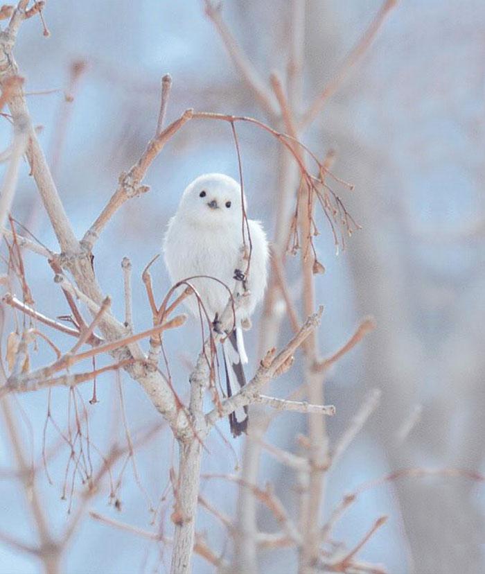 A ilha de Hokkaido no Japão é o lar de animais super fofos (22)