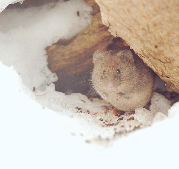 A ilha de Hokkaido no Japão é o lar de animais super fofos (23)