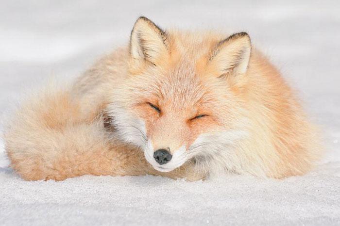 A ilha de Hokkaido no Japão é o lar de animais super fofos (3)