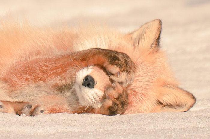 A ilha de Hokkaido no Japão é o lar de animais super fofos (6)
