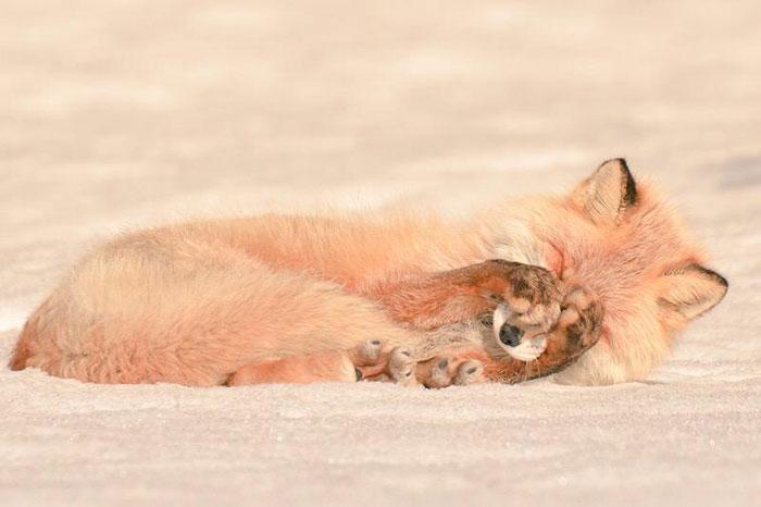 A ilha de Hokkaido no Japão é o lar de animais super fofos (7)