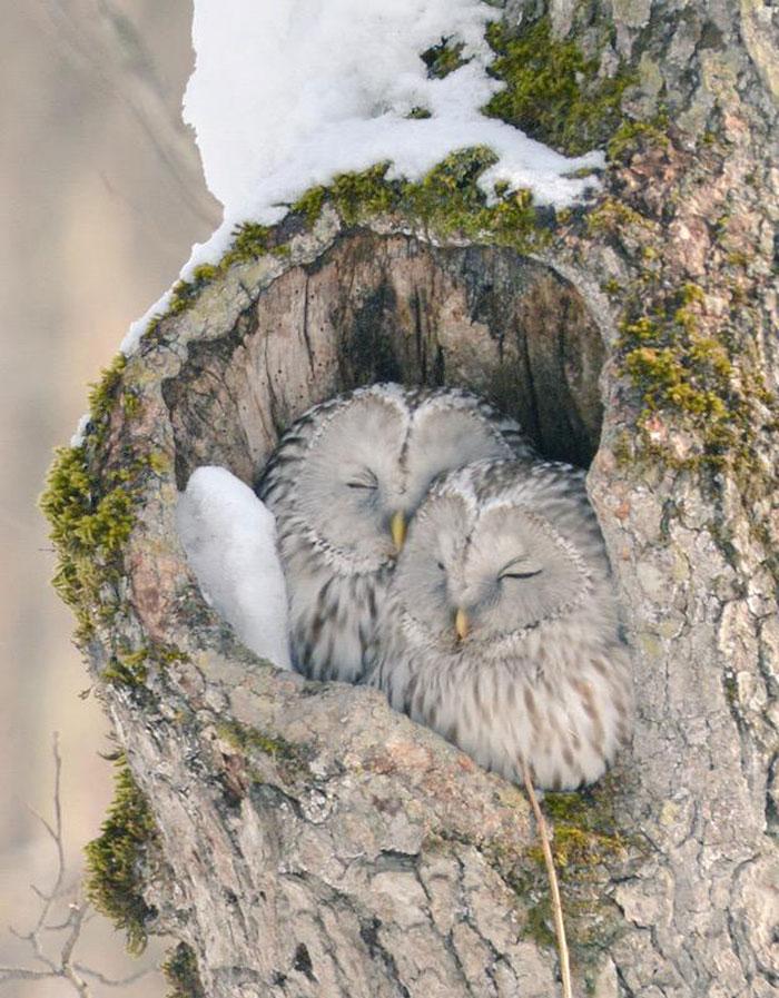 A ilha de Hokkaido no Japão é o lar de animais super fofos (9)