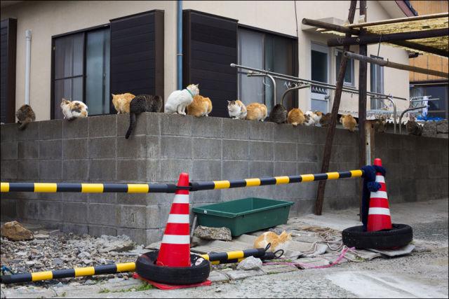 A ilha dos gatos no Japão (12)