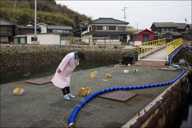 A ilha dos gatos no Japão (13)