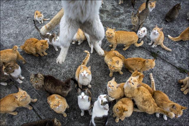 A ilha dos gatos no Japão (16)