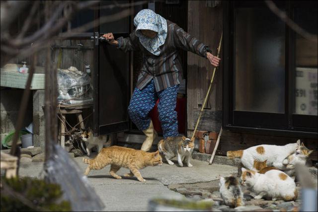 A ilha dos gatos no Japão (20)