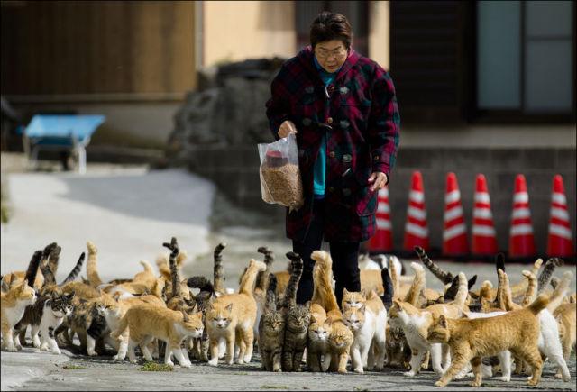 A ilha dos gatos no Japão (21)