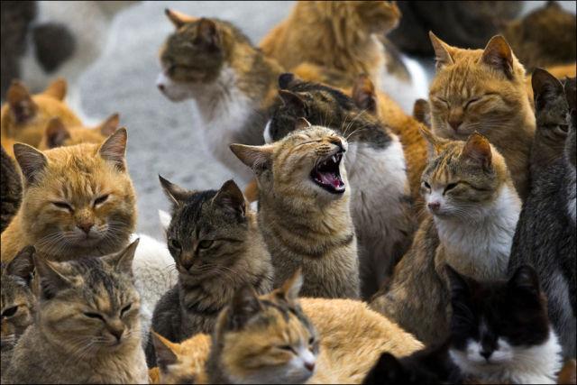 A ilha dos gatos no Japão (24)