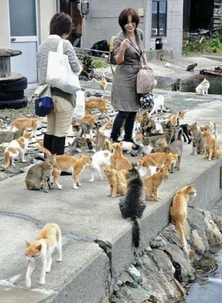 A ilha dos gatos no Japão (25)