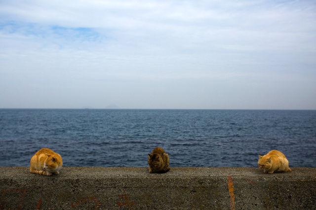 A ilha dos gatos no Japão (26)