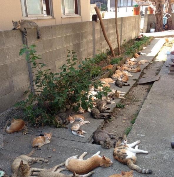 A ilha dos gatos no Japão (28)