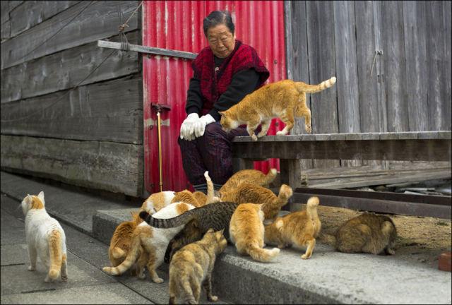 A ilha dos gatos no Japão (3)