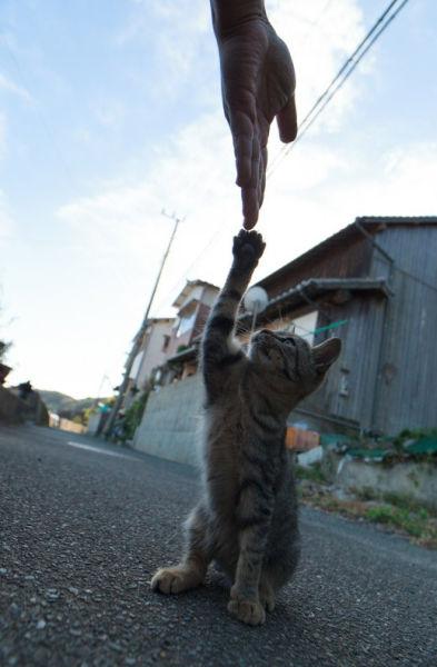A ilha dos gatos no Japão (30)